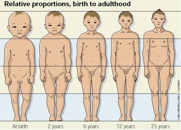 Anatomia, względne proporcje ciała człowieka od 0 do 25 lat - rysunek poglądowy; źródło: VOLVO, Children in cars