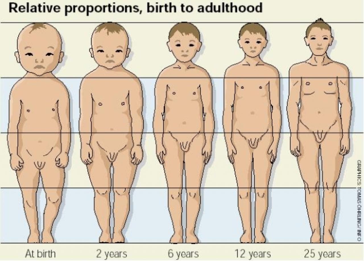 Główka 9-miesięcznego noworodka stanowi 25% całkowitej jego masy ciała. Głowa dorosłego mężczyzny to tylko 6% jego masy.